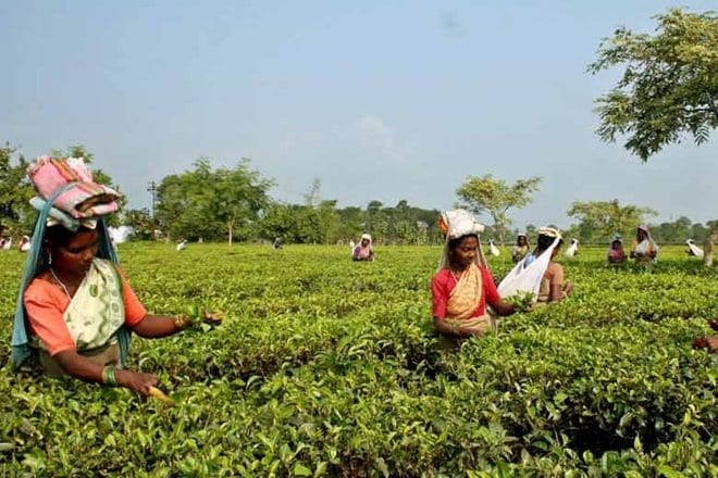 Mohani Tea accelerates business growth with Microsoft Cloud